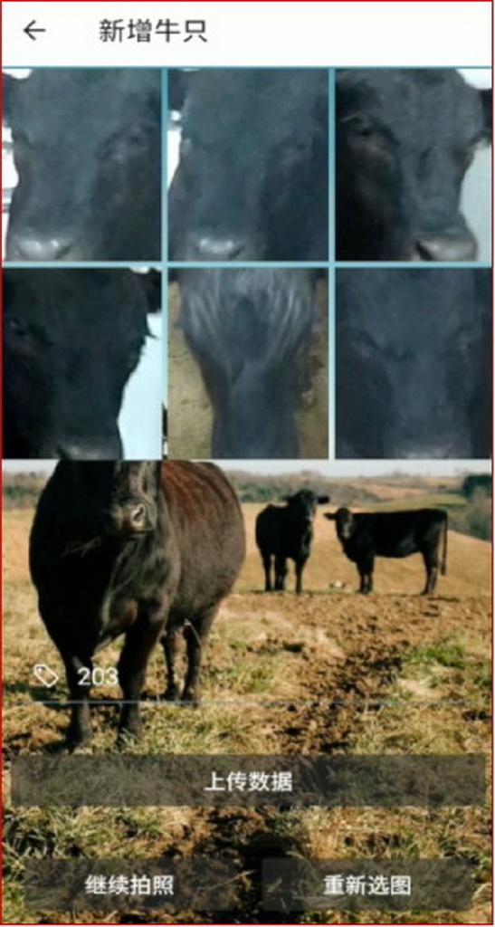 """移动应用开发竞赛作品——""""智能牛ID管家""""—基于安卓及牛脸识别的养殖保险服务系统"""